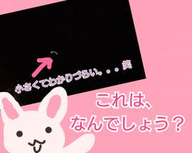 しじみ13ちゃんの7/11 (土) 23:53のブログ