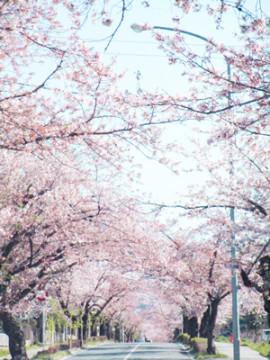 まこと★**ちゃんの3/14 (土) 16:49のブログ